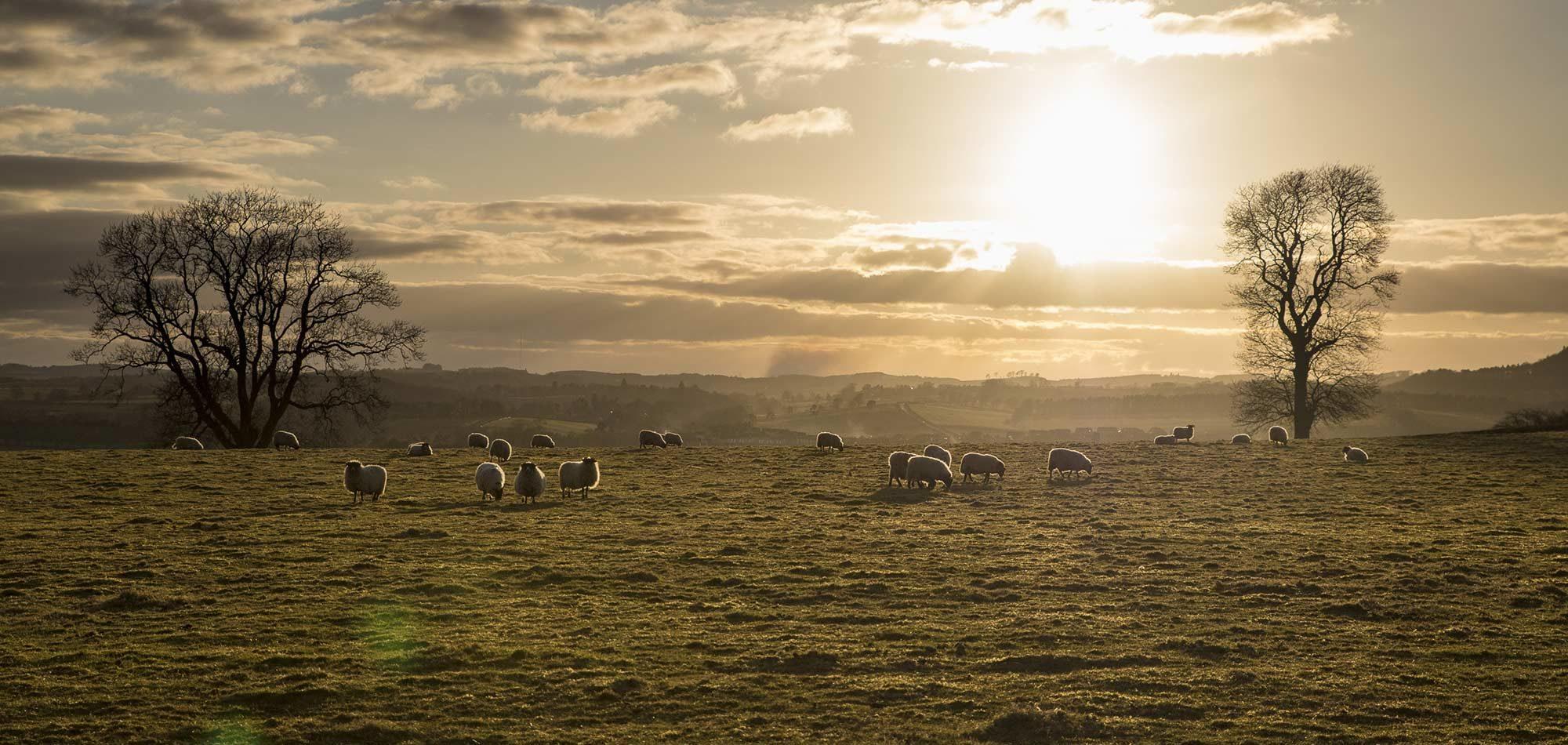 mouton ecosse roadtrip sir edwards