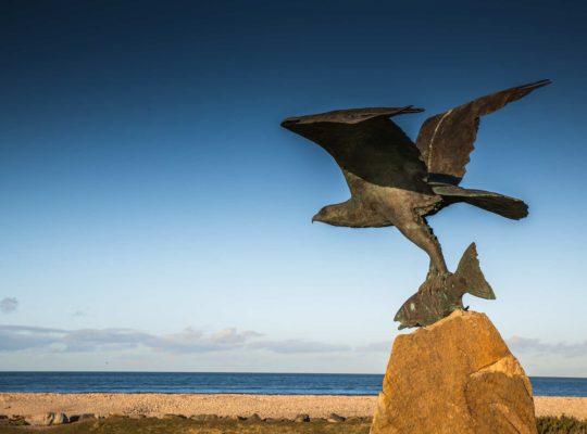 The raptor of Spey Bay