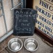 A refreshment for doggies