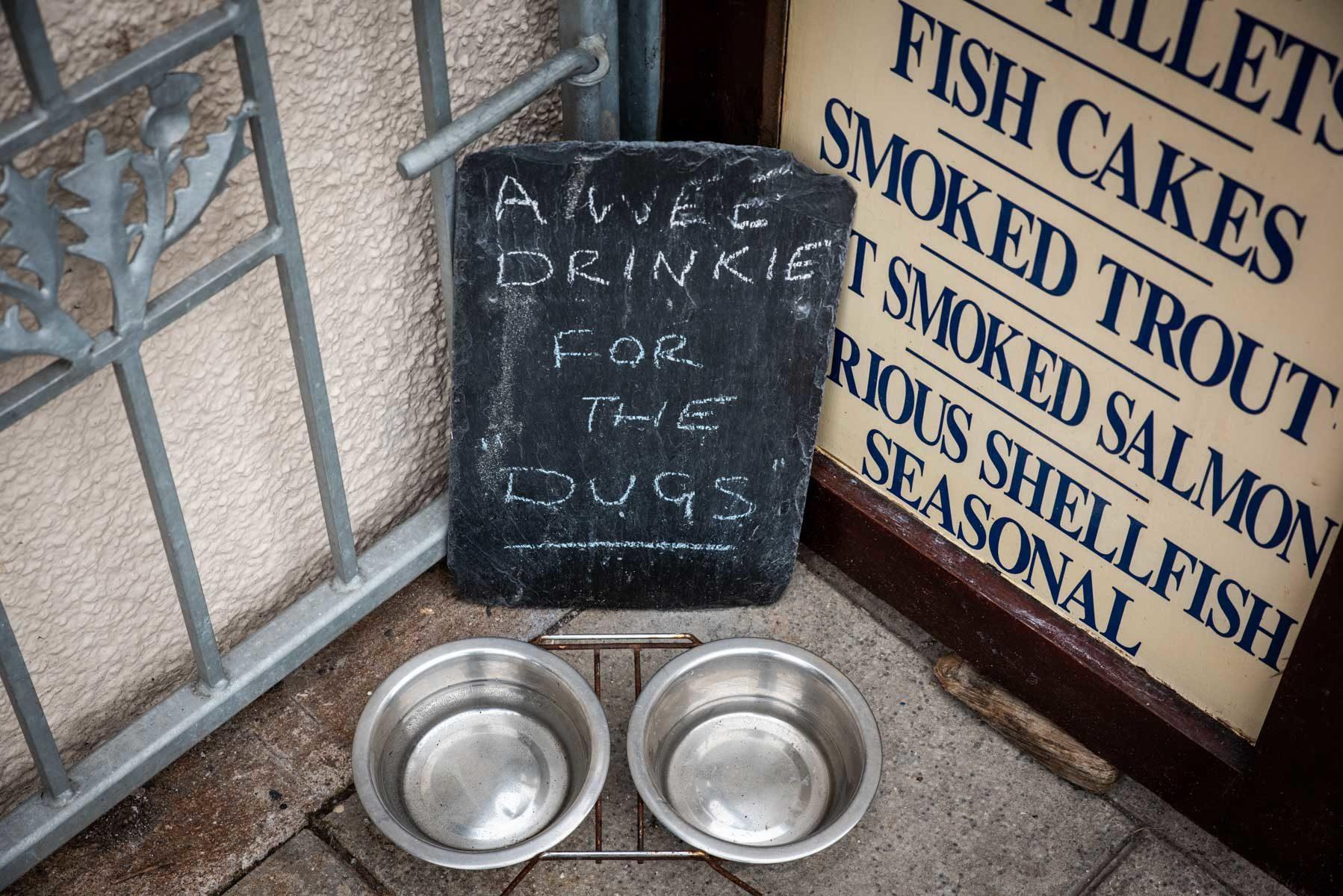 a-refreshment-for-doggies-sir-edwards-roatrip
