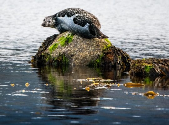 The seals of Lamlash Bay