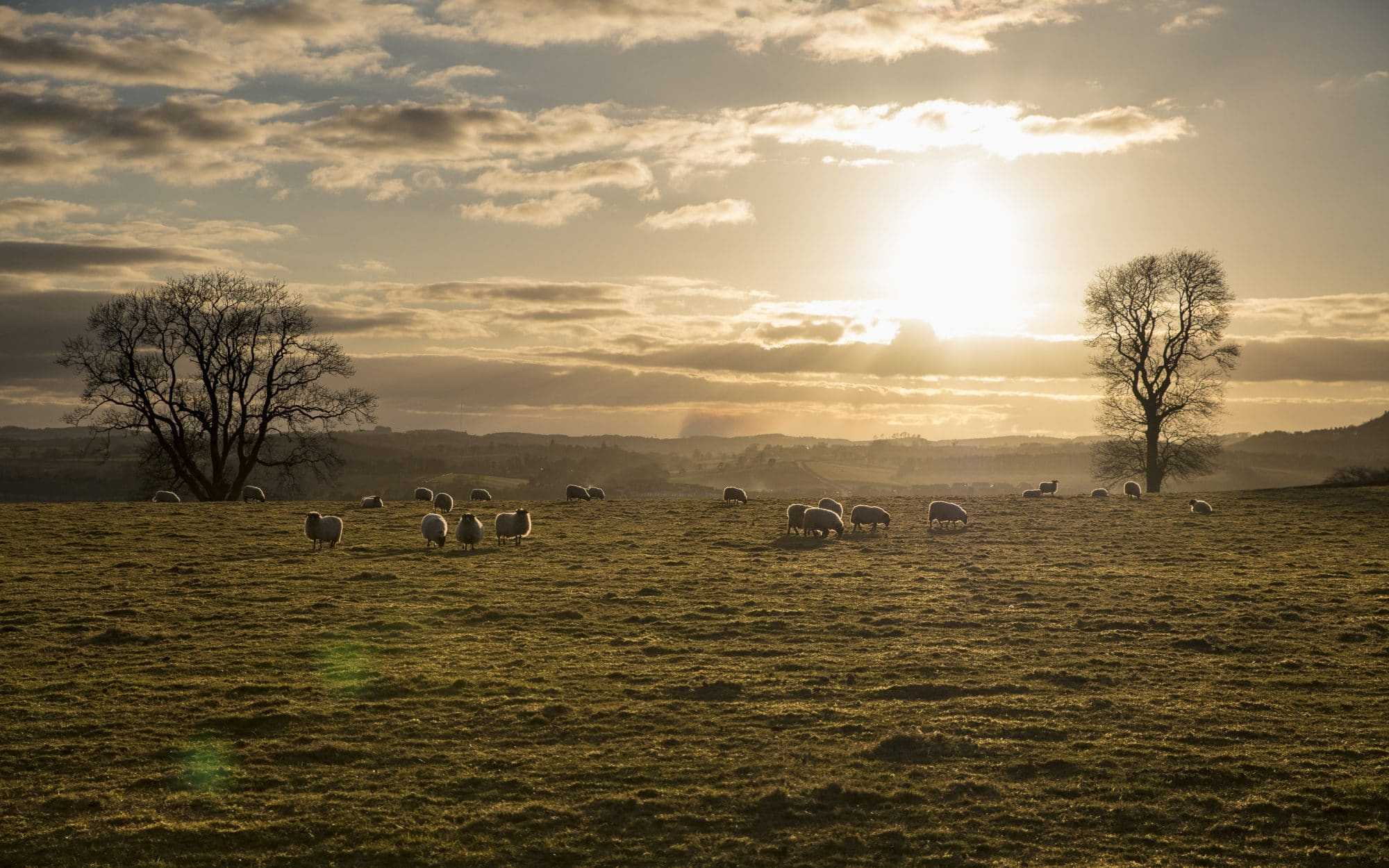 happy-as-a-scottish-sheep-sir-edwards-roadtrip