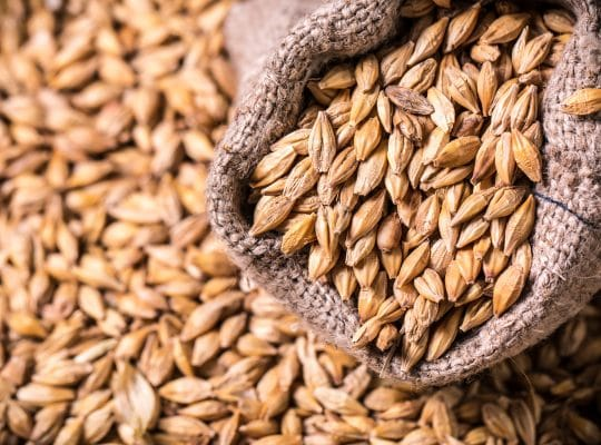 Whisky cereal grains